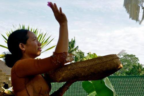 Bu Wayan, istri Pak Nyoman Suarja, sembayang pagi di pura kecil yang terletak di samping rumah kami. [2013: E O]