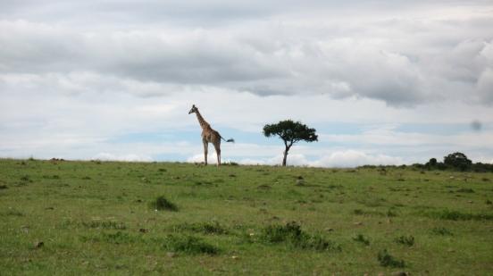 Giraffe [2009: Oktofani]