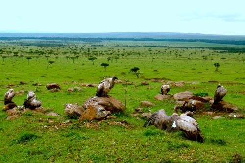 A group of vultures [2009: Oktofani]