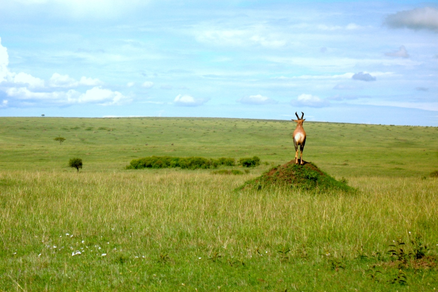 An antelope [2009: Oktofani]