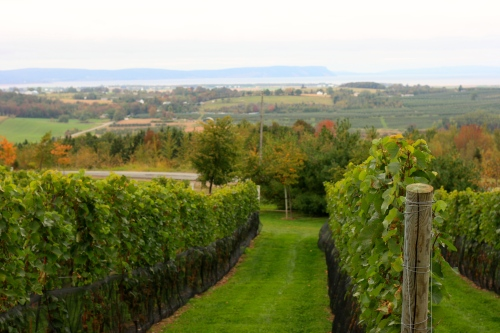 Domaine de Grand Pré vineyards, Nova Scotia [2014:EO]