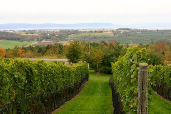 Domaine de Grand Pré vineyards, Nova Scotia [2014:EO]
